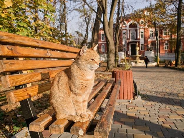Тематические квесты в Одессе